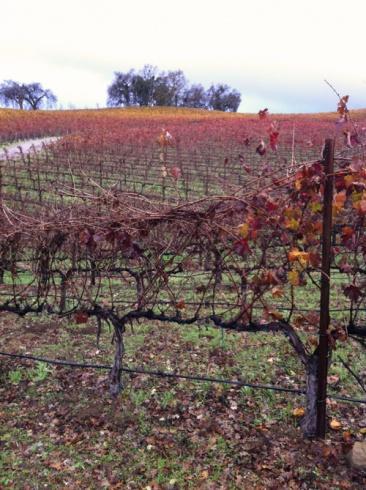 Winter at JUUSTIN Vineyards & Winery